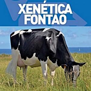 Xenetica Fontao-vert