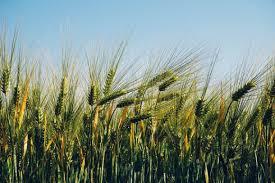 ¿Donde están las oportunidades en el mercado agroalimentario en Turquía?