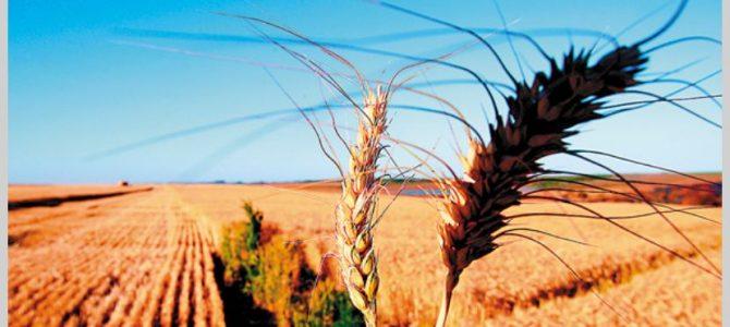 Oportunidad comercial:Brasil recorta 9,8% la estimación de cosecha